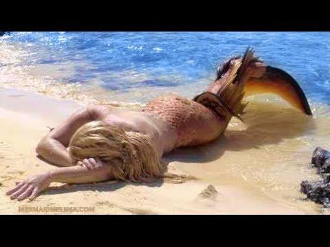 بالصور صور عروسه البحر , حوريات البحار مابين الحقيقه و الاساطير 4286 2