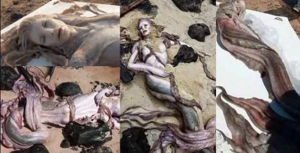 بالصور صور عروسه البحر , حوريات البحار مابين الحقيقه و الاساطير 4286 3