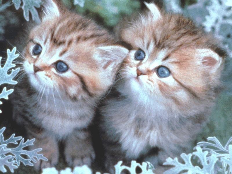 صوره اجمل الصور للقطط في العالم , احلي الصور لاجمل قطط بالعالم