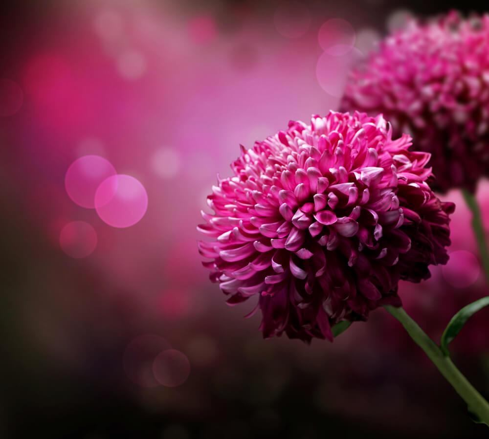 صورة صور زهور , اجمل صور لزهور رائعة