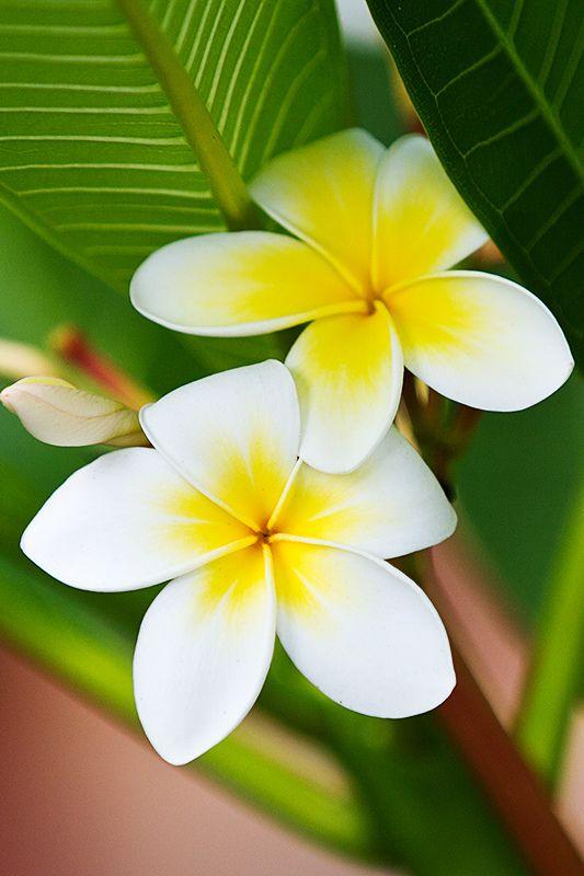 صور صور زهور , اجمل صور لزهور رائعة