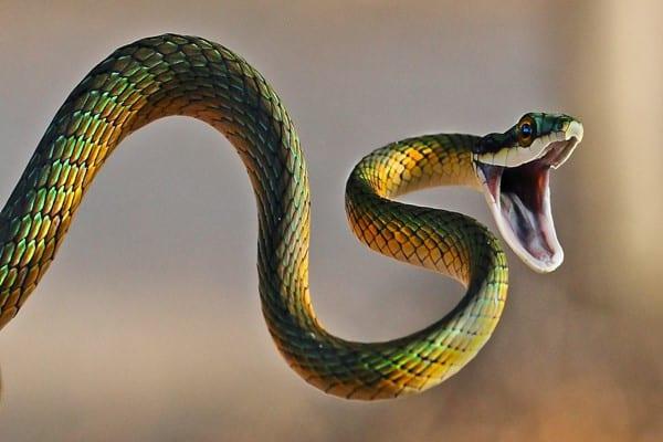 صور تفسير رؤية الثعبان في المنام , اكتشف تفسير الحلم بالثعبان في منامك