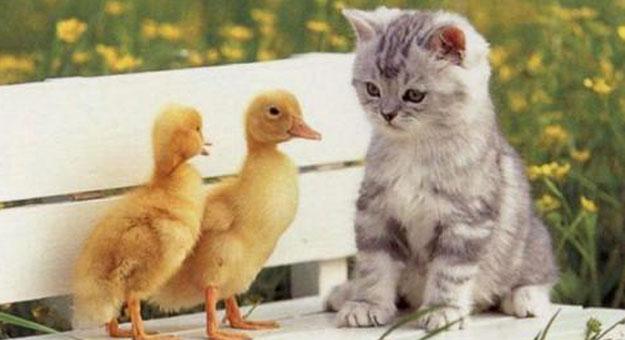 صوره صور قطط مضحكة , احلي صور مضحكة للقطط الجميلة