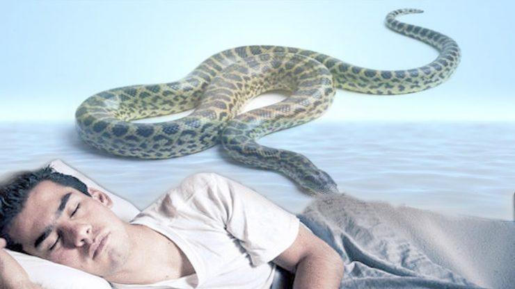 بالصور تفسير حلم الثعابين في البيت , رؤية الثعبان في المنام 2291 2