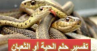 تفسير حلم الثعابين في البيت , رؤية الثعبان في المنام