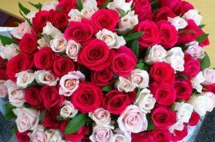 صور ازهار جميلة , اجمل انواع الازهار