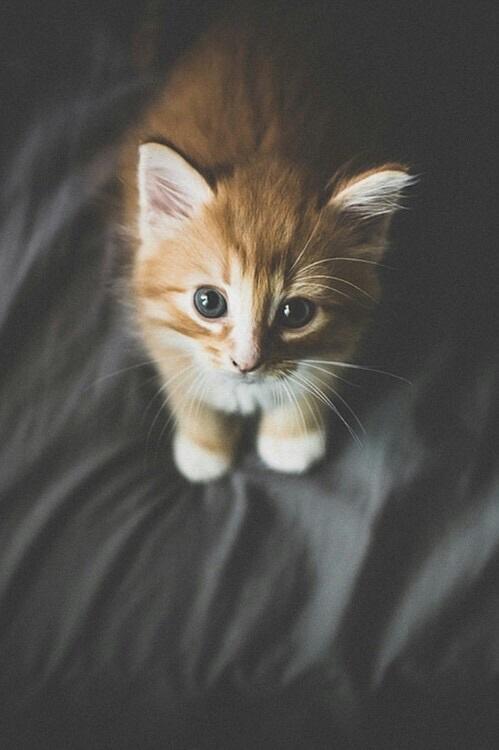 صوره خلفيات قطط , اروع صور قطط جميله