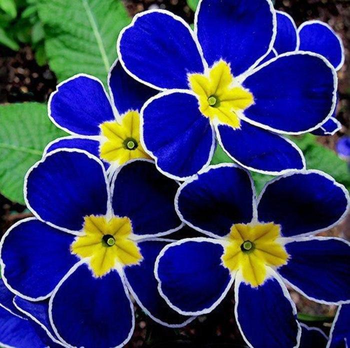 بالصور صور ازهار , احلي صور لازهار وورود جميلة 6490 1