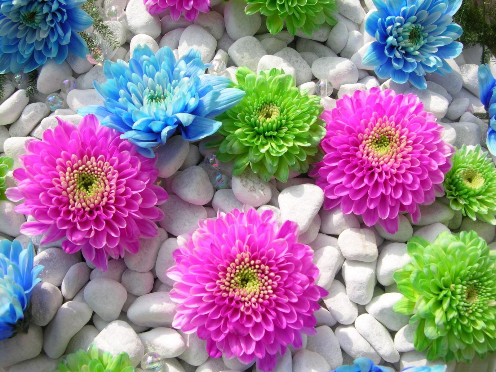 بالصور صور ازهار , احلي صور لازهار وورود جميلة 6490 2