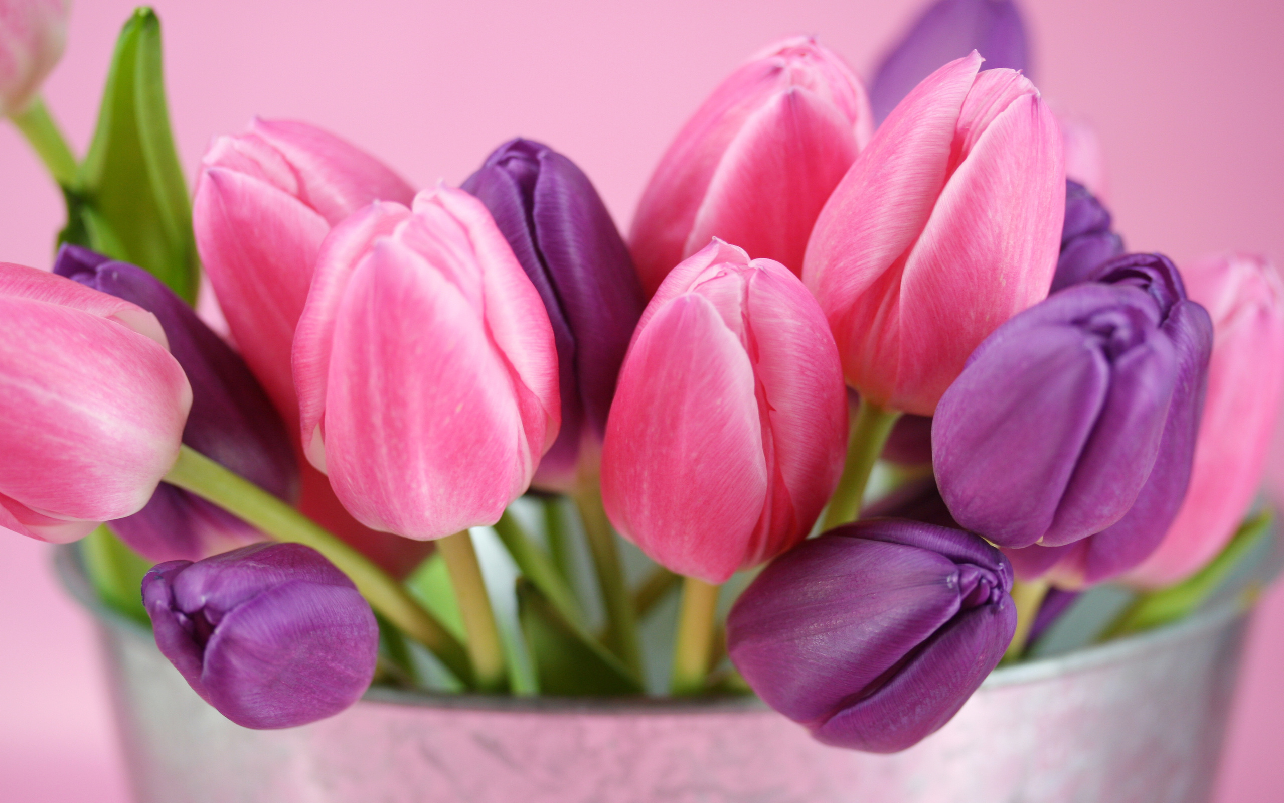 بالصور صور ازهار , احلي صور لازهار وورود جميلة 6490 3