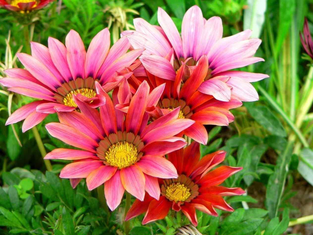 بالصور صور ازهار , احلي صور لازهار وورود جميلة 6490 5