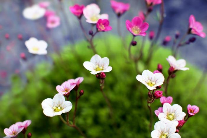 بالصور صور ازهار , احلي صور لازهار وورود جميلة 6490 7