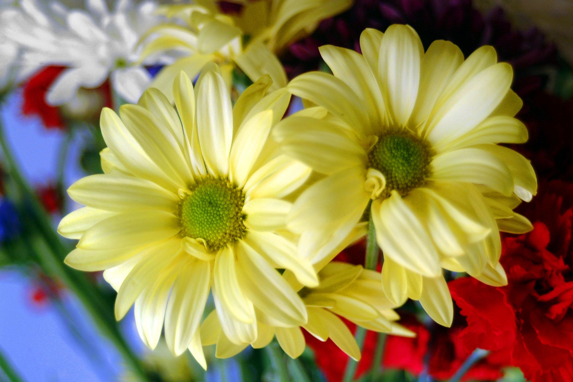 بالصور صور ازهار , احلي صور لازهار وورود جميلة 6490 8