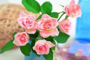 صور صور ازهار , احلي صور لازهار وورود جميلة
