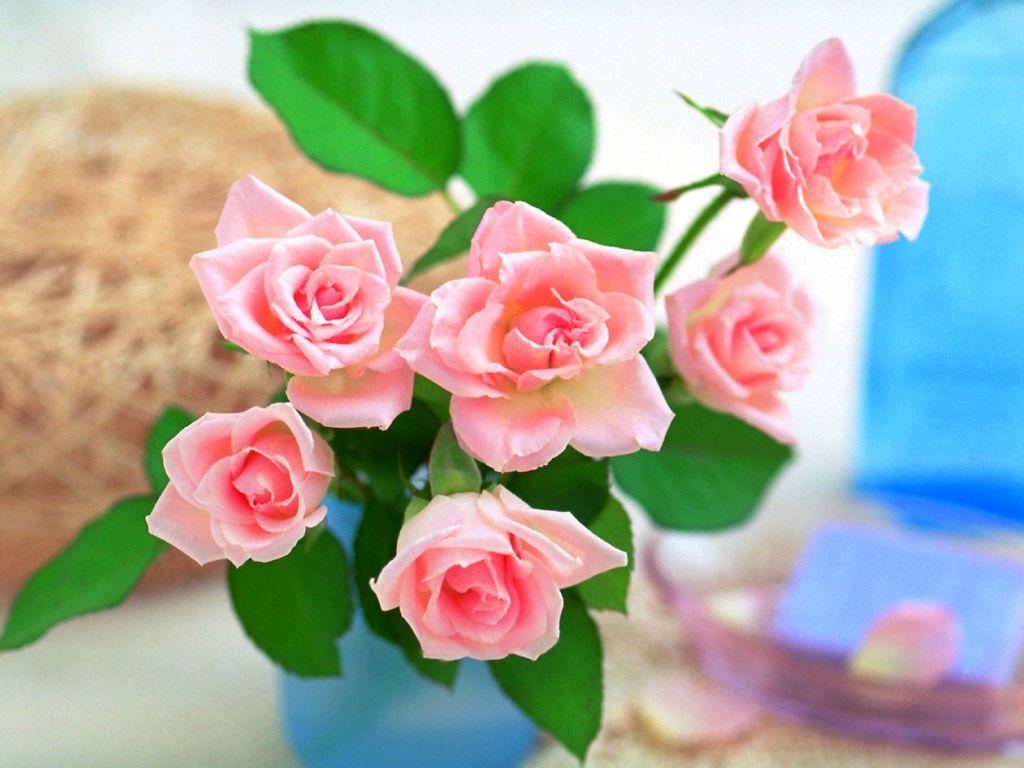 صوره صور ازهار , احلي صور لازهار وورود جميلة