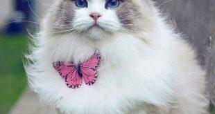 صوره اجمل صور قطط , صور لاحلي قطط جميلة
