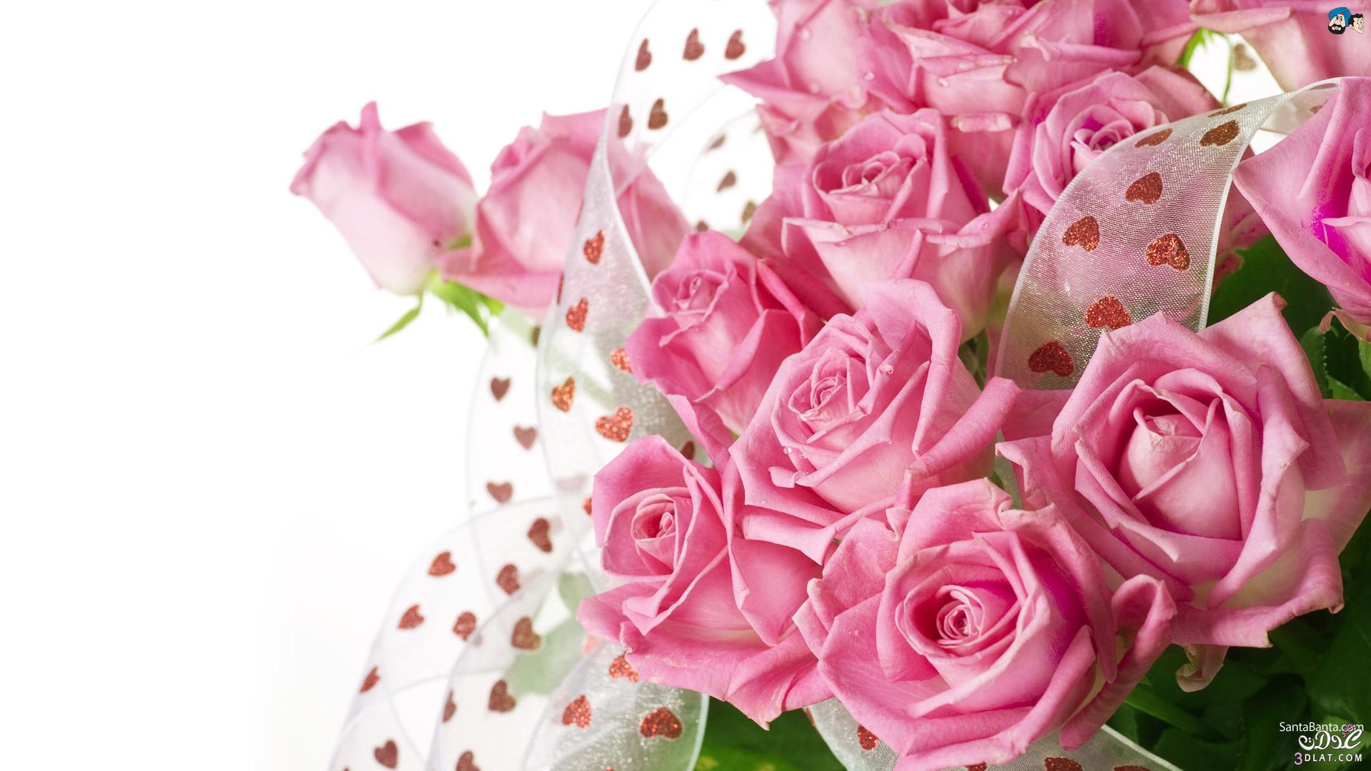 صور خلفيات ورود جميلة جدا , اروع صور وخلفيات لزهور جميلة جدا