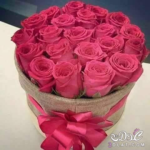 صورة صور ورد جميل , اجمل صور الورد