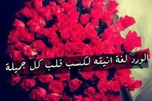 صور كلمات عن الورد , اجمل كلام عن الورد