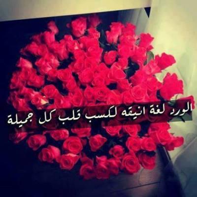 صورة كلمات عن الورد , اجمل كلام عن الورد
