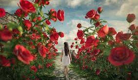 صوره اجمل صور الورد , صور ورد روعة