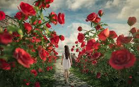 صور اجمل صور الورد , صور ورد روعة
