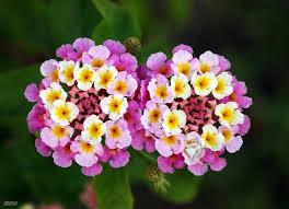 بالصور اجمل صور الورد , صور ورد روعة 2517 5