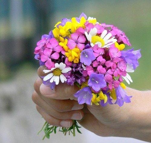 بالصور اجمل صور الورد , صور ورد روعة 2517 7