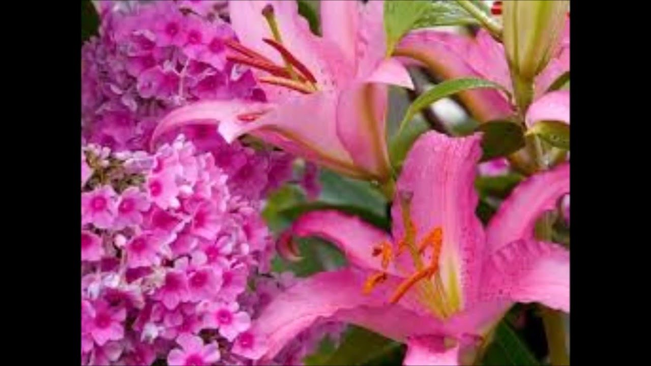 بالصور اجمل صور الورد , صور ورد روعة 2517 9