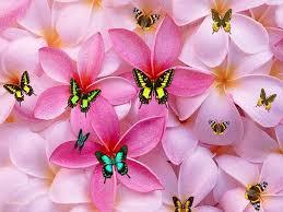 صوره خلفيات وردي , اجمل الخلفيات و الصور الورديه اللون