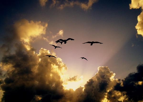 بالصور صور جميلة عن الحياة , اجمل و اروع الصور من الحياة 277 9