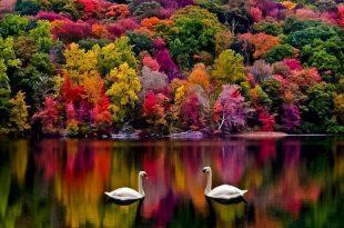 بالصور اروع الصور للطبيعة , اجمل المناظر الطبعية 289 11 310x205