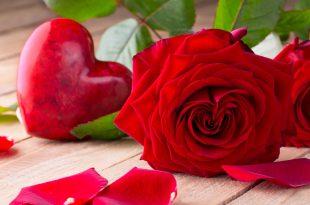 بالصور صور الورد , اجمل ورد ممكن تشوفه 3094 12 310x205
