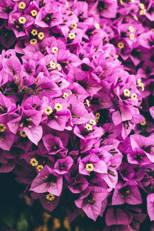 بالصور صور الورد , اجمل ورد ممكن تشوفه 3094 4