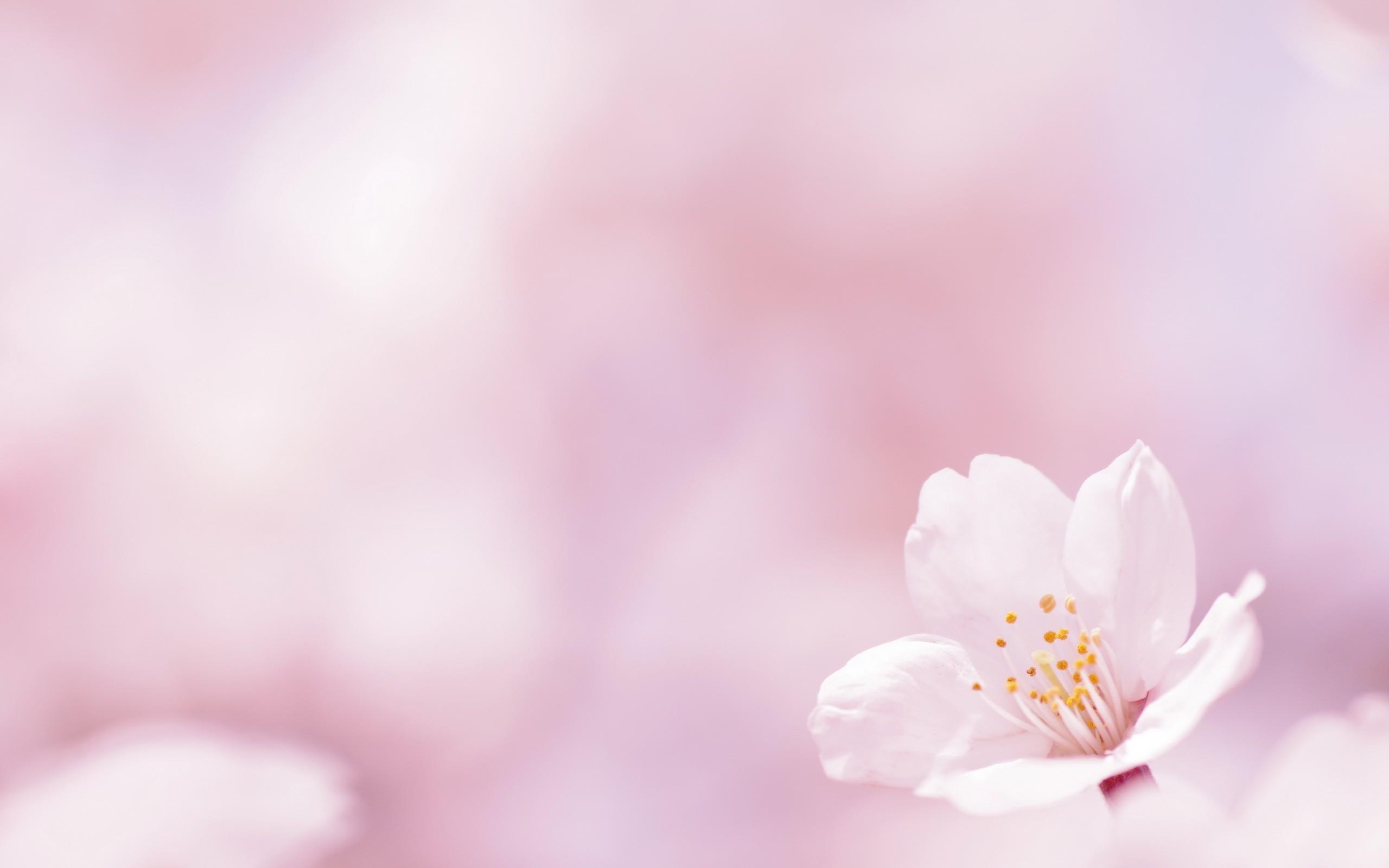 بالصور صور الورد , اجمل ورد ممكن تشوفه 3094 5