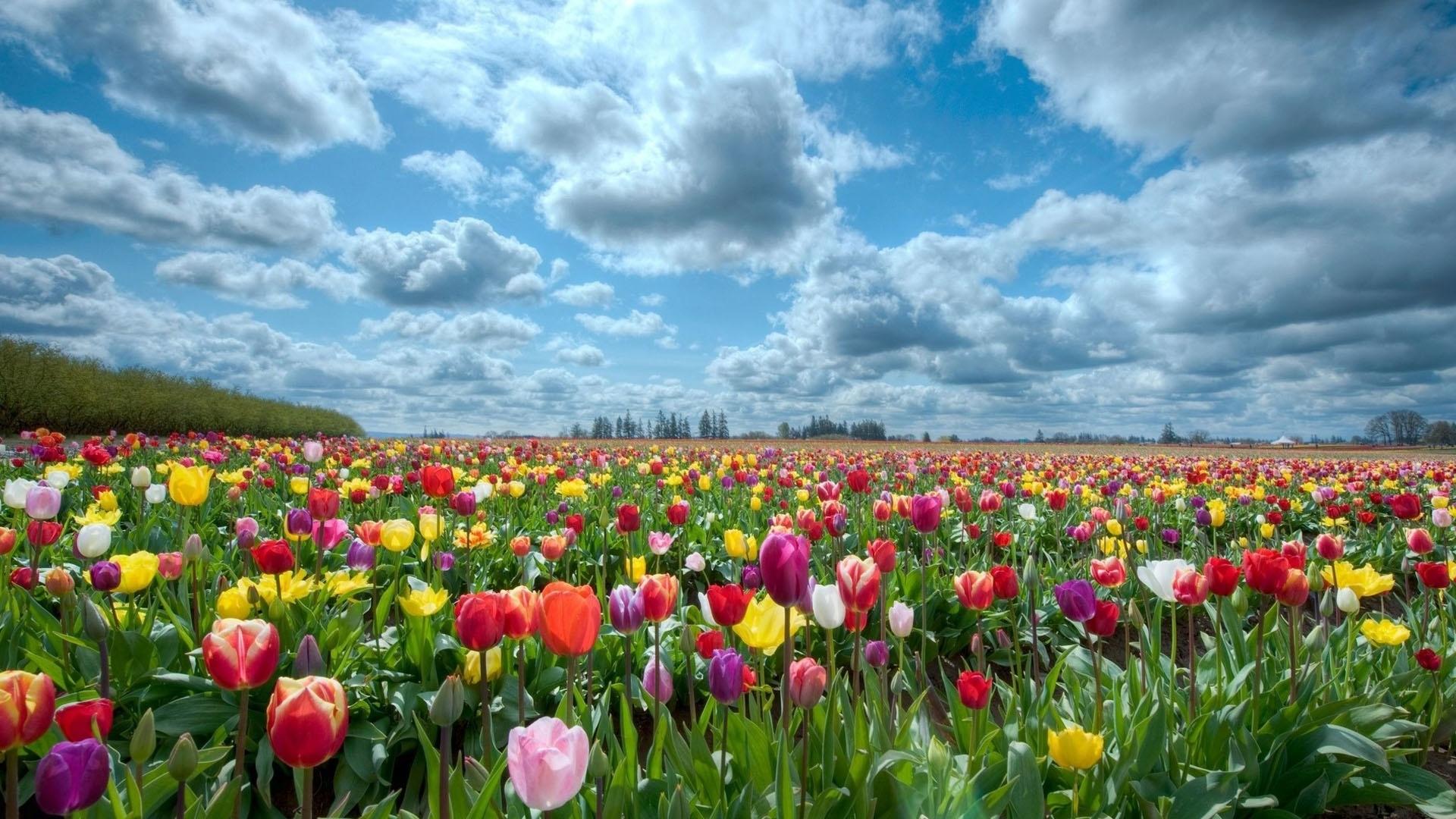 بالصور صور الورد , اجمل ورد ممكن تشوفه 3094 6