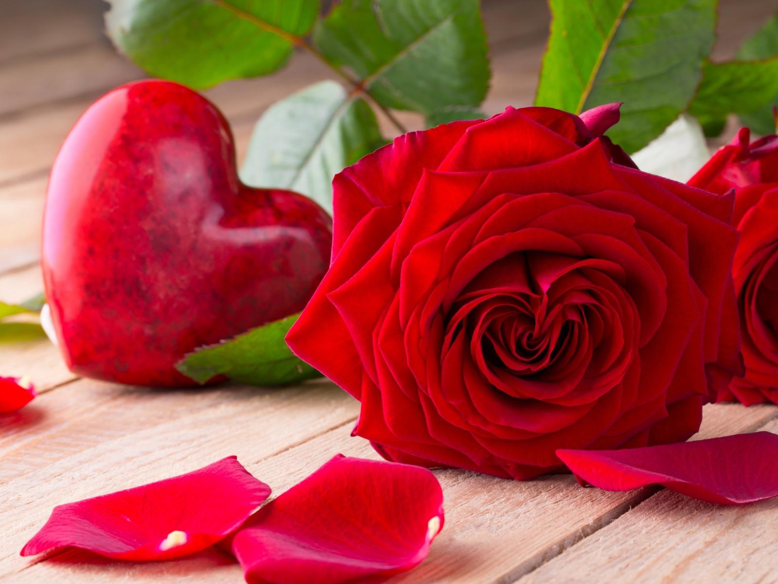 بالصور صور الورد , اجمل ورد ممكن تشوفه 3094