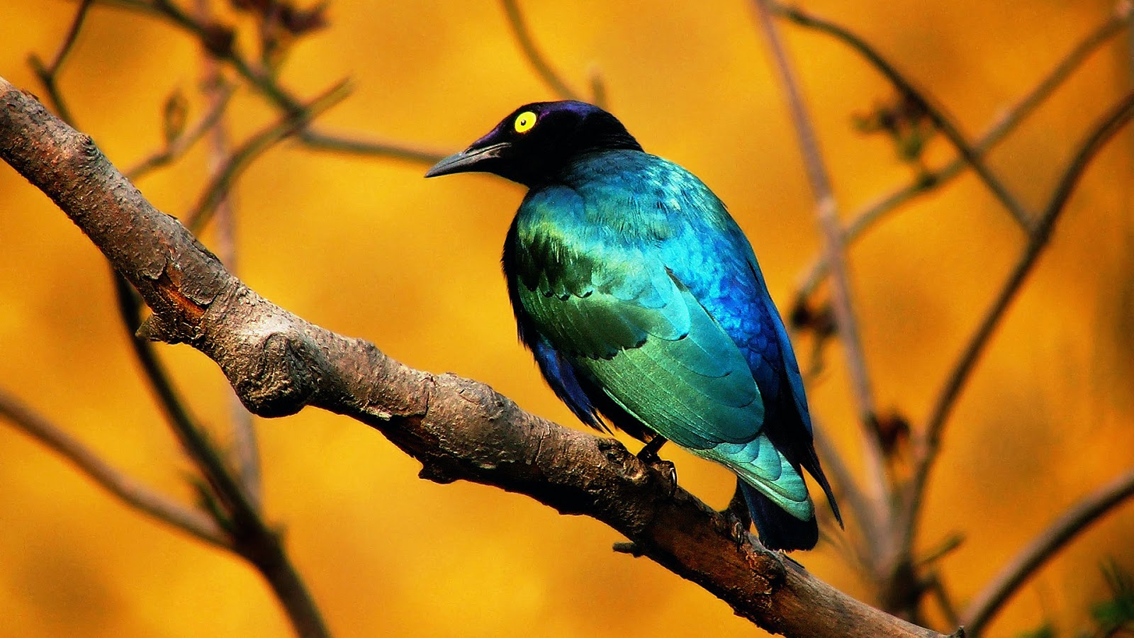 بالصور اجمل الطيور في العالم , تعرف علي اجمل واروع اشكال الطيور 3467 10