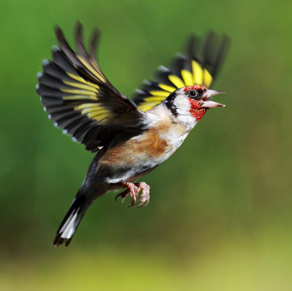 بالصور اجمل الطيور في العالم , تعرف علي اجمل واروع اشكال الطيور 3467 11