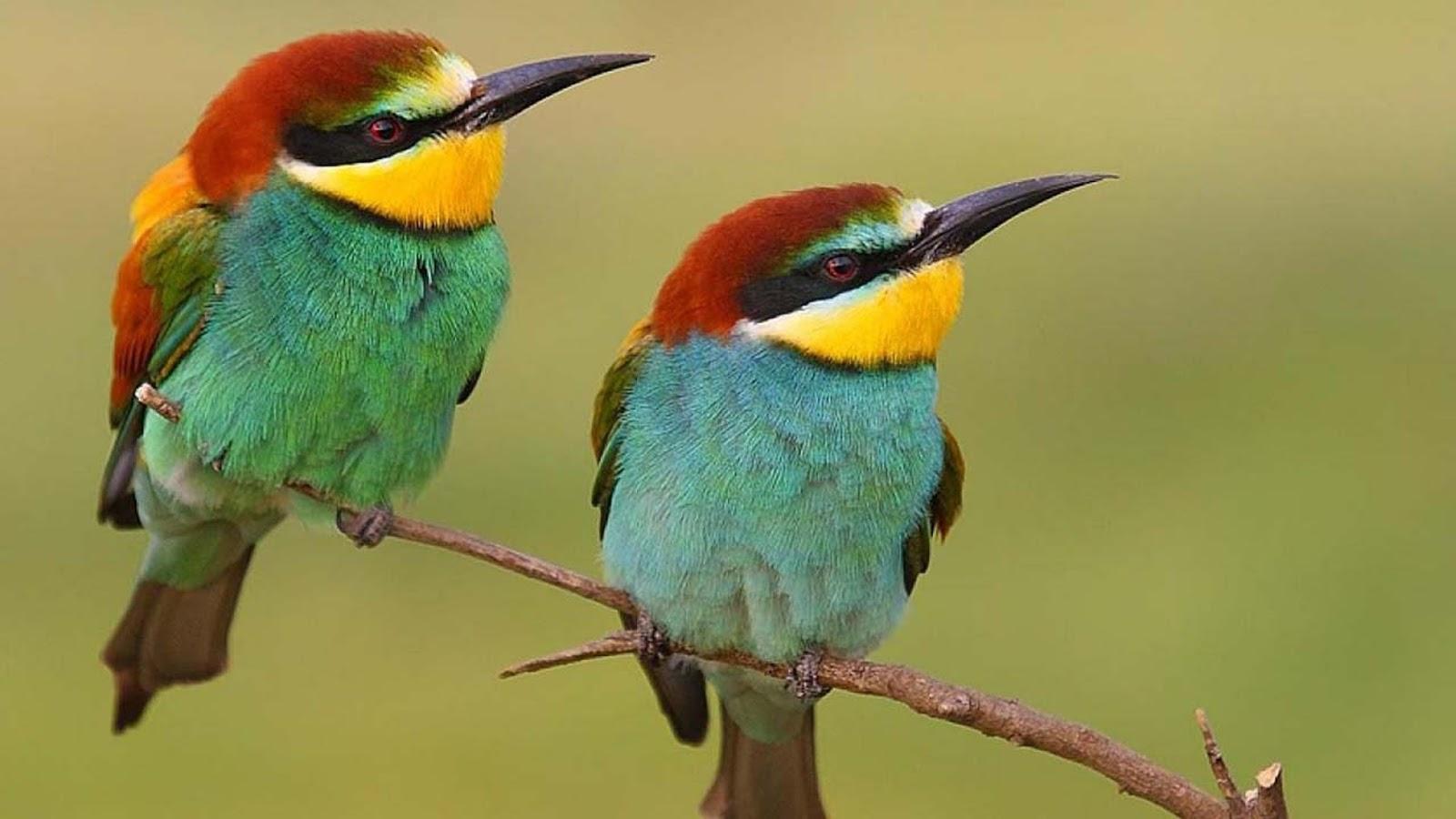 بالصور اجمل الطيور في العالم , تعرف علي اجمل واروع اشكال الطيور 3467 12
