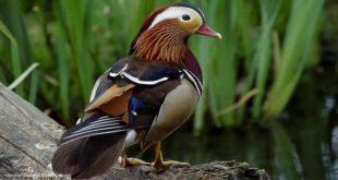 صوره اجمل الطيور في العالم , تعرف علي اجمل واروع اشكال الطيور