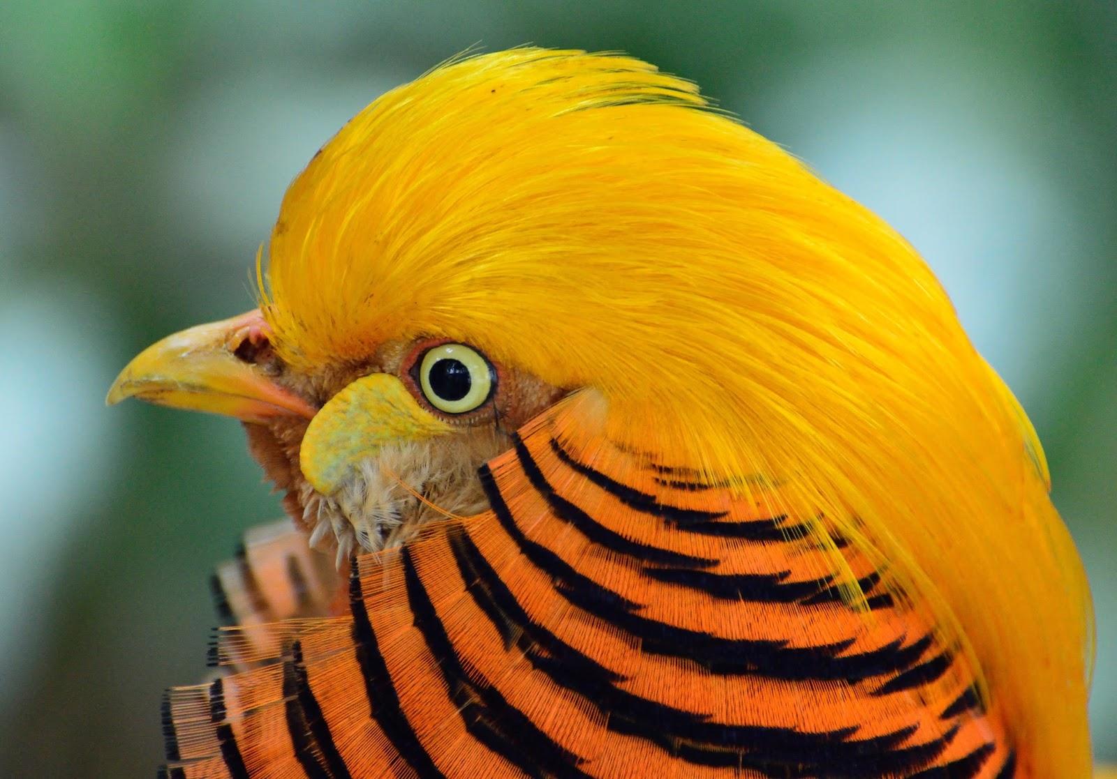 بالصور اجمل الطيور في العالم , تعرف علي اجمل واروع اشكال الطيور 3467 2