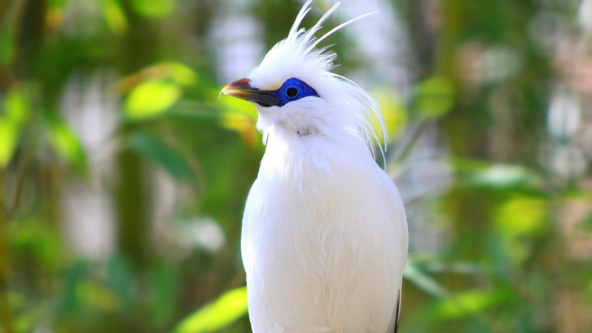 بالصور اجمل الطيور في العالم , تعرف علي اجمل واروع اشكال الطيور 3467 3