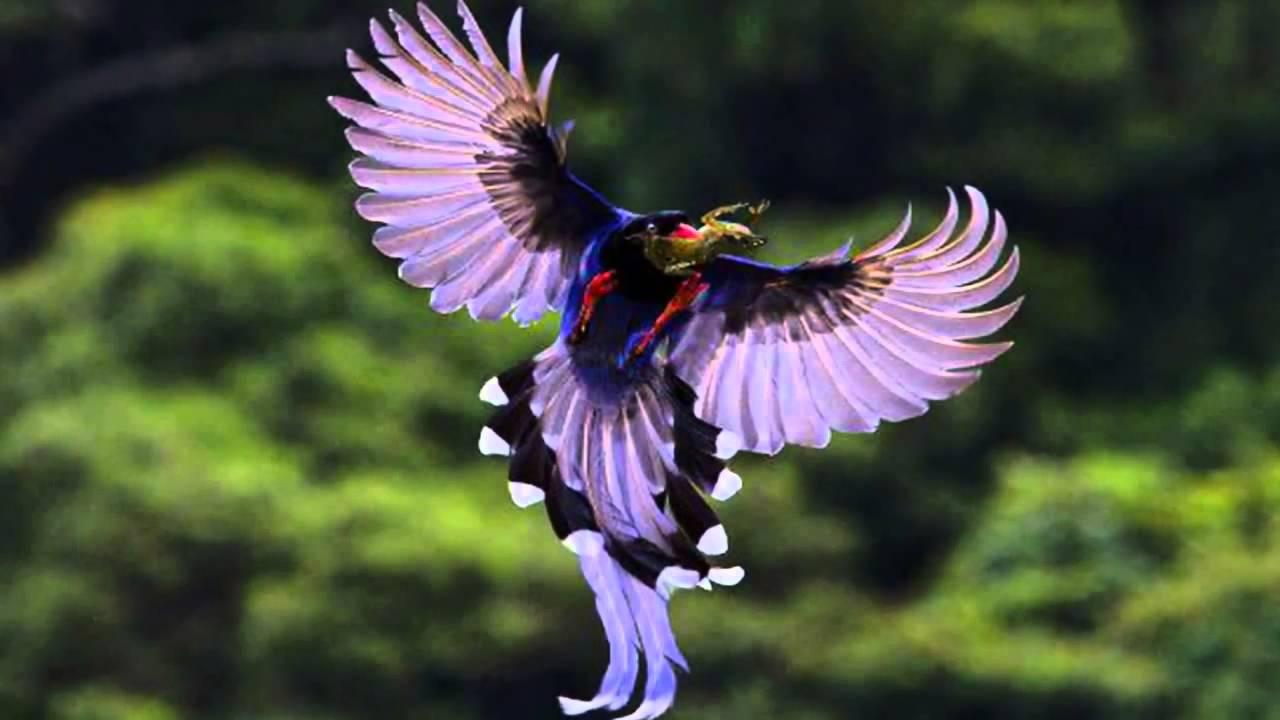 بالصور اجمل الطيور في العالم , تعرف علي اجمل واروع اشكال الطيور 3467 4