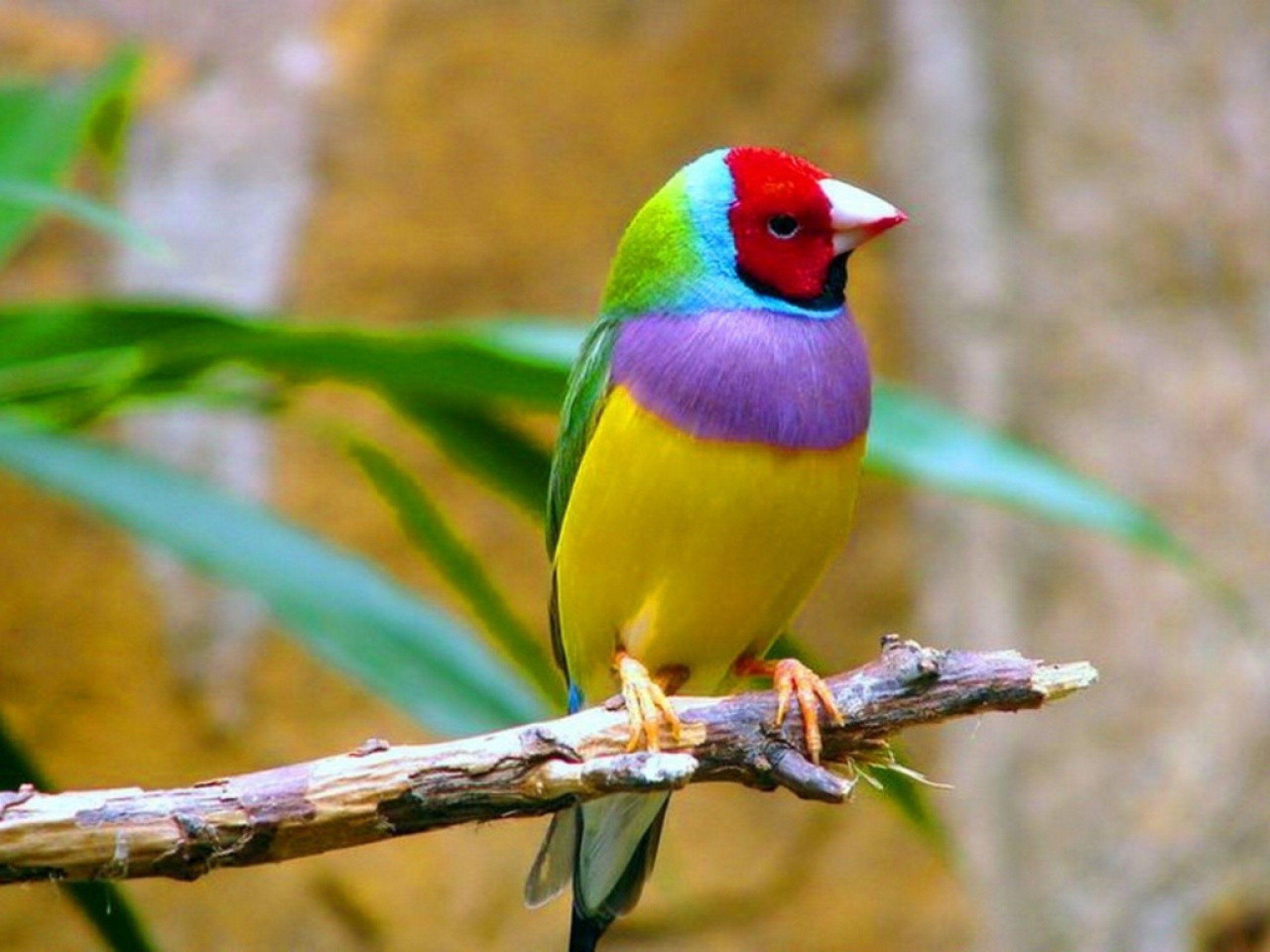 بالصور اجمل الطيور في العالم , تعرف علي اجمل واروع اشكال الطيور 3467 5