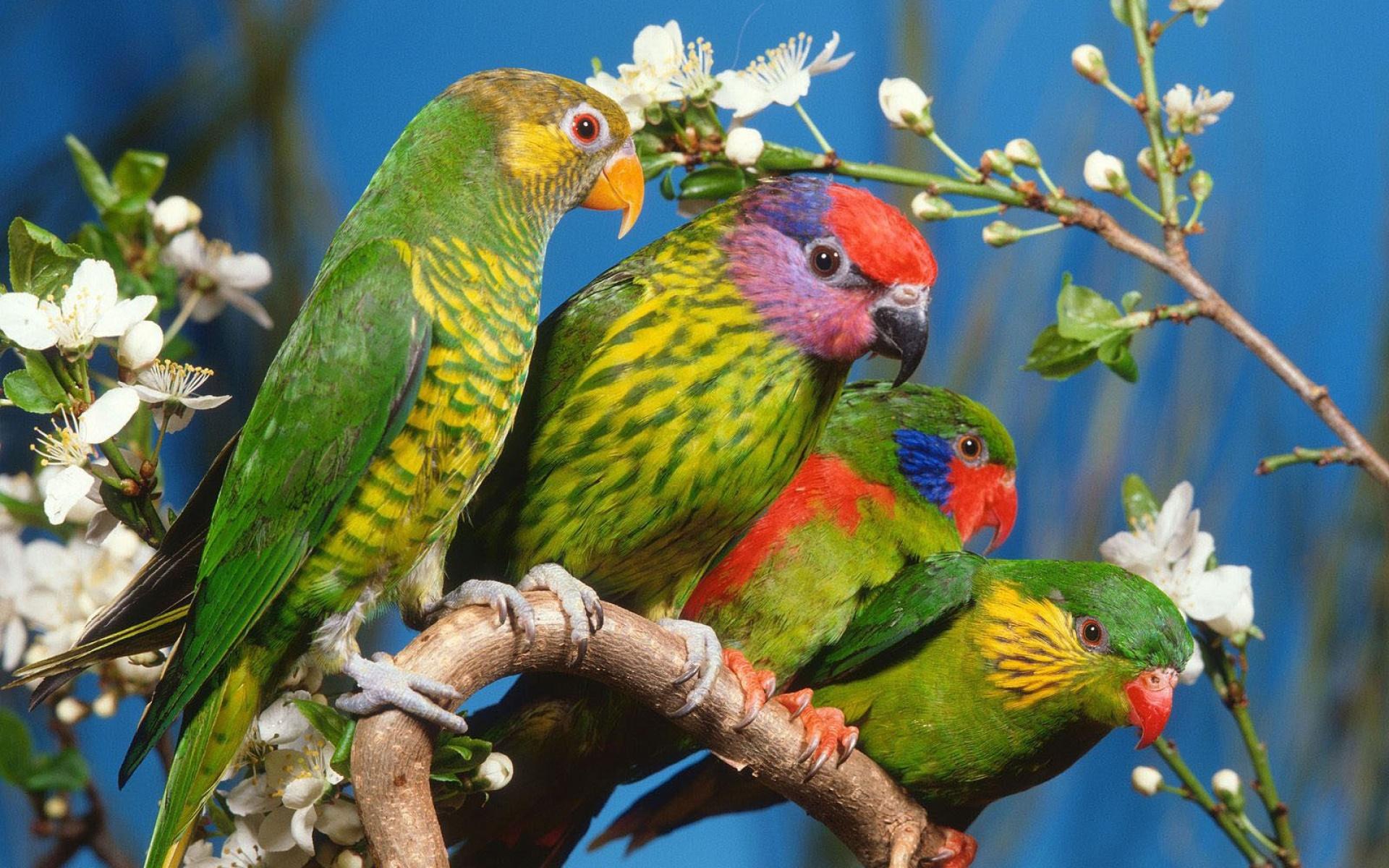 بالصور اجمل الطيور في العالم , تعرف علي اجمل واروع اشكال الطيور 3467 6