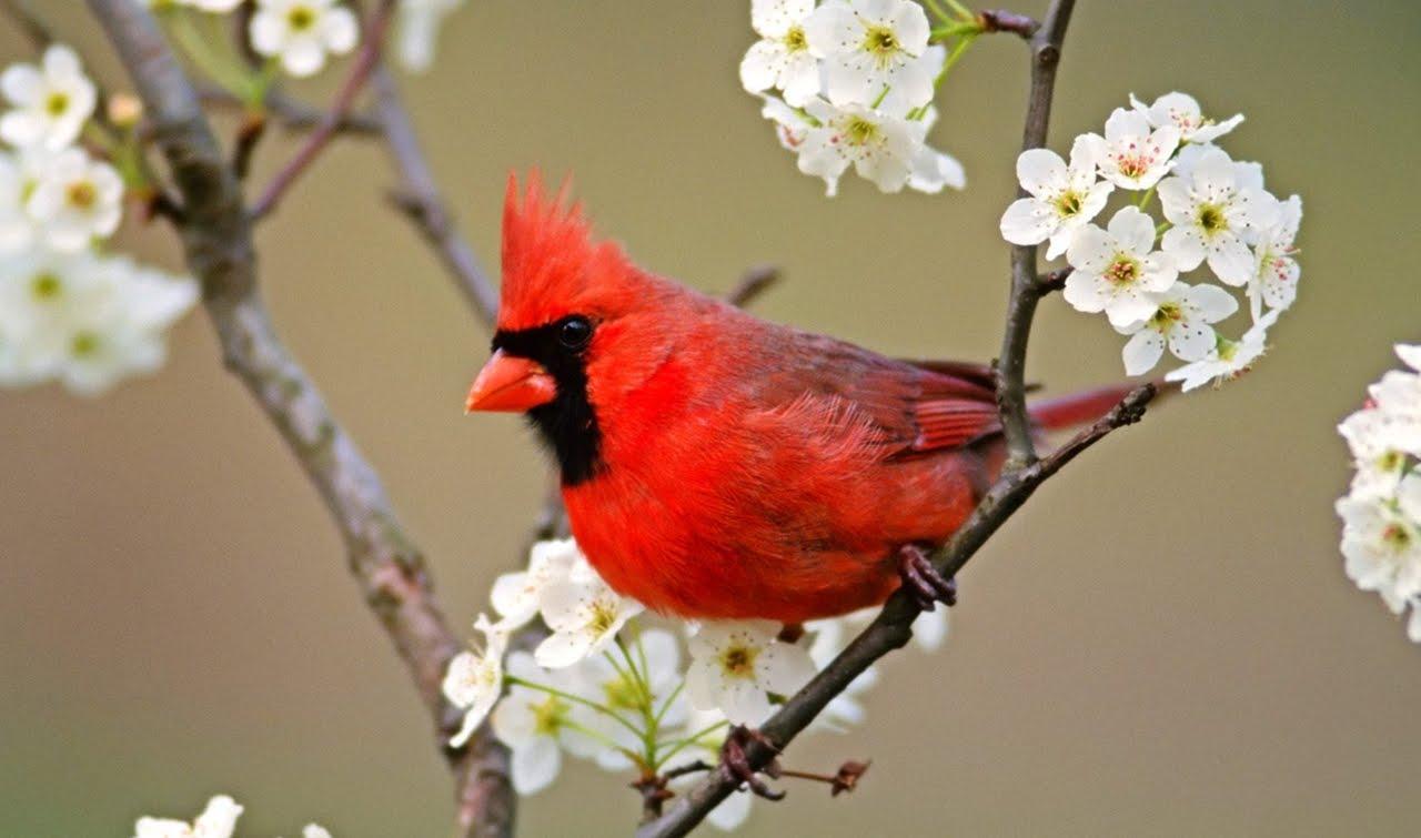 بالصور اجمل الطيور في العالم , تعرف علي اجمل واروع اشكال الطيور 3467 7