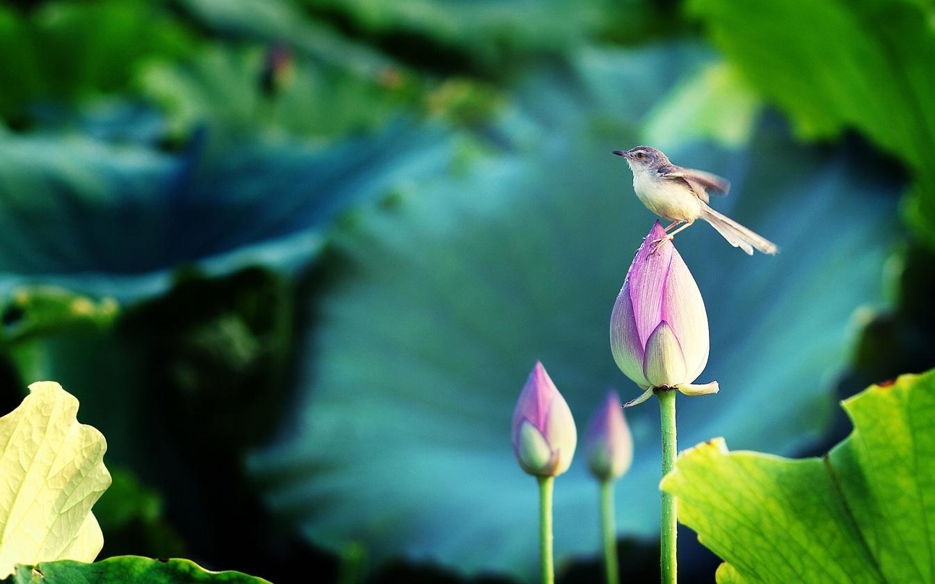 بالصور اجمل الطيور في العالم , تعرف علي اجمل واروع اشكال الطيور 3467 8