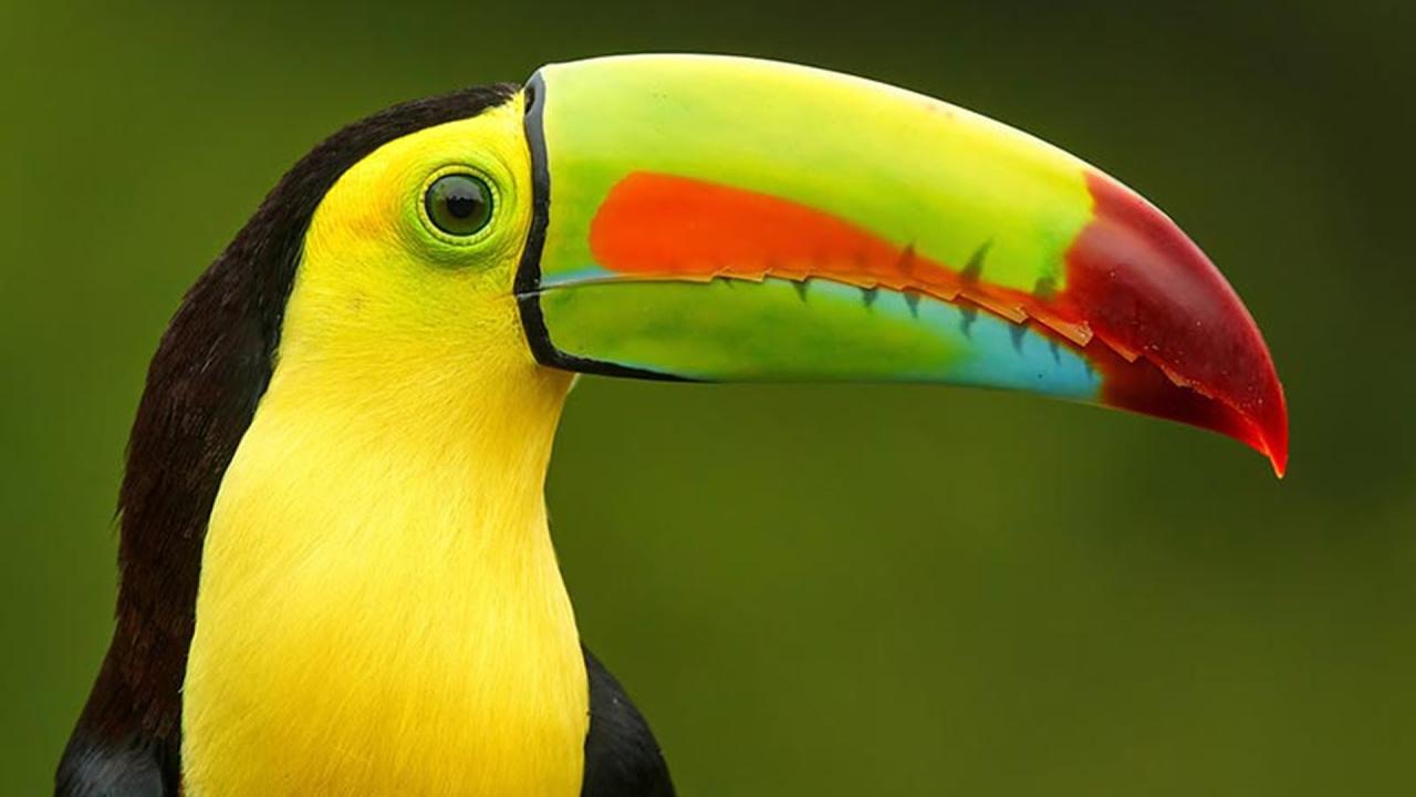 بالصور اجمل الطيور في العالم , تعرف علي اجمل واروع اشكال الطيور 3467 9