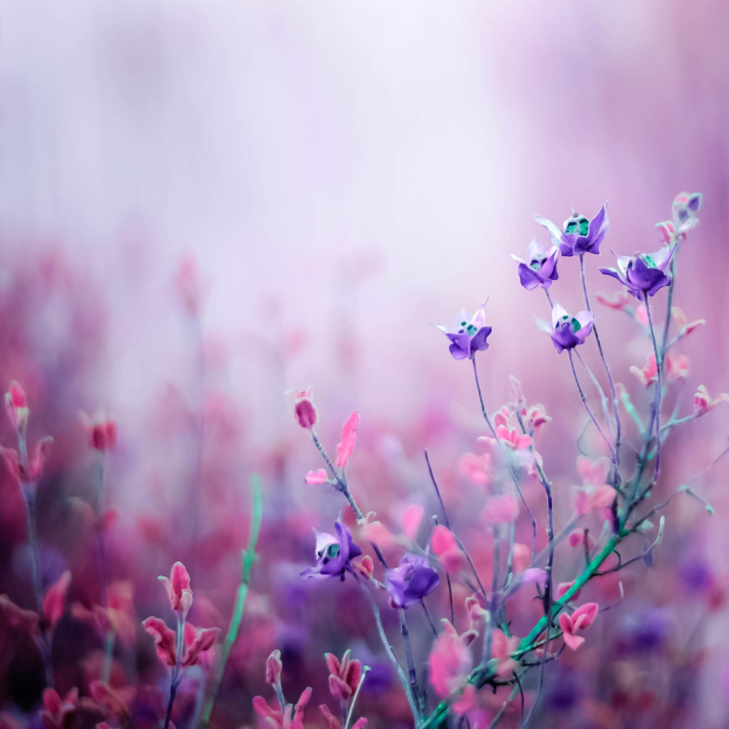 صور صور ورد خلفيات , اجمل اشكال وانواع الورود